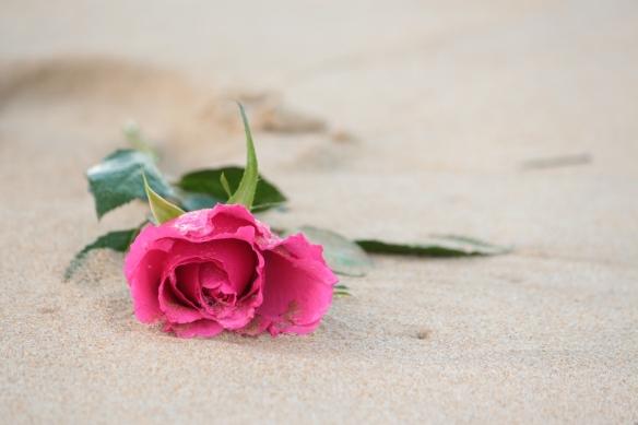 Pammy's rose