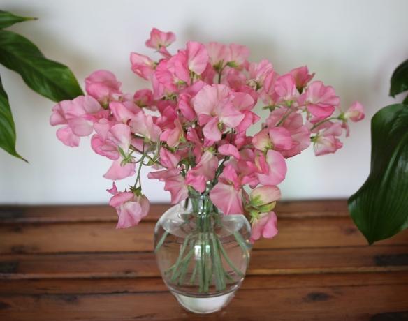 Sweet peas pink
