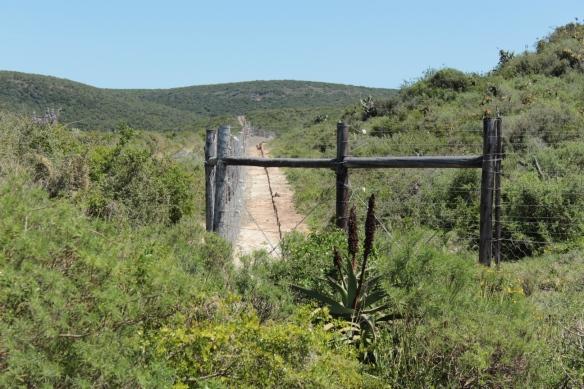 Addo border 45