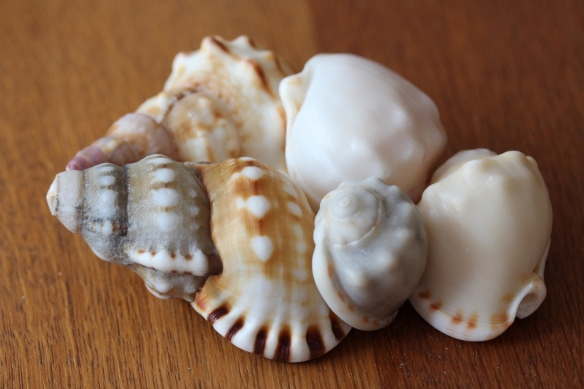 Shells from walk