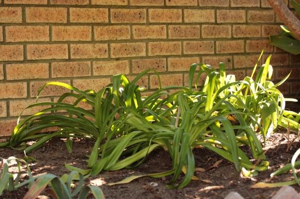 Garden May 2014 9