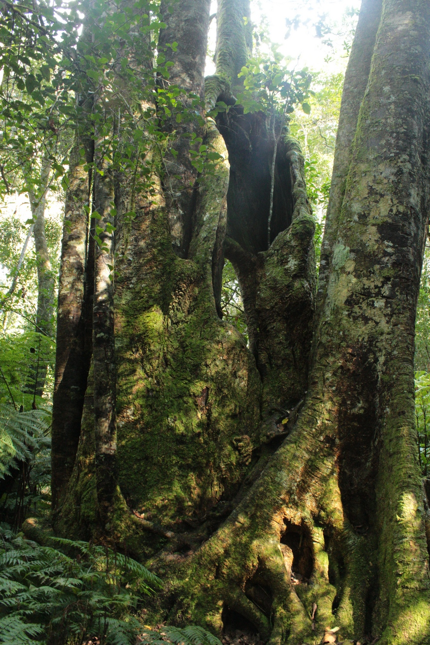 Garden of Eden, Knysna | The Complete Book