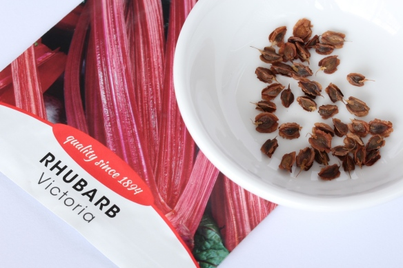 Rhubarb Seed