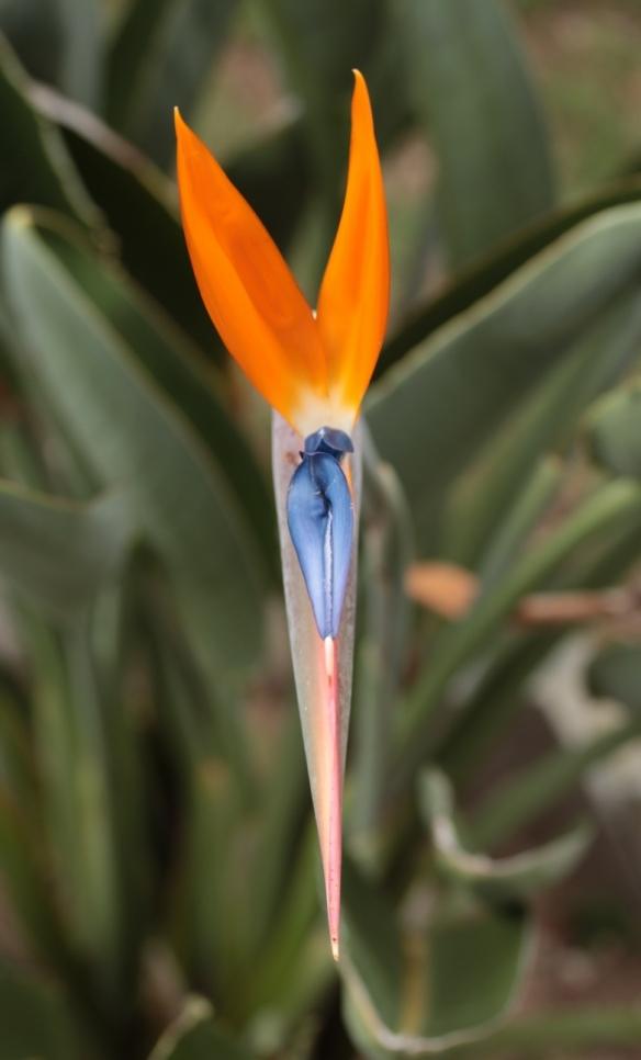 Garden May 2015 10