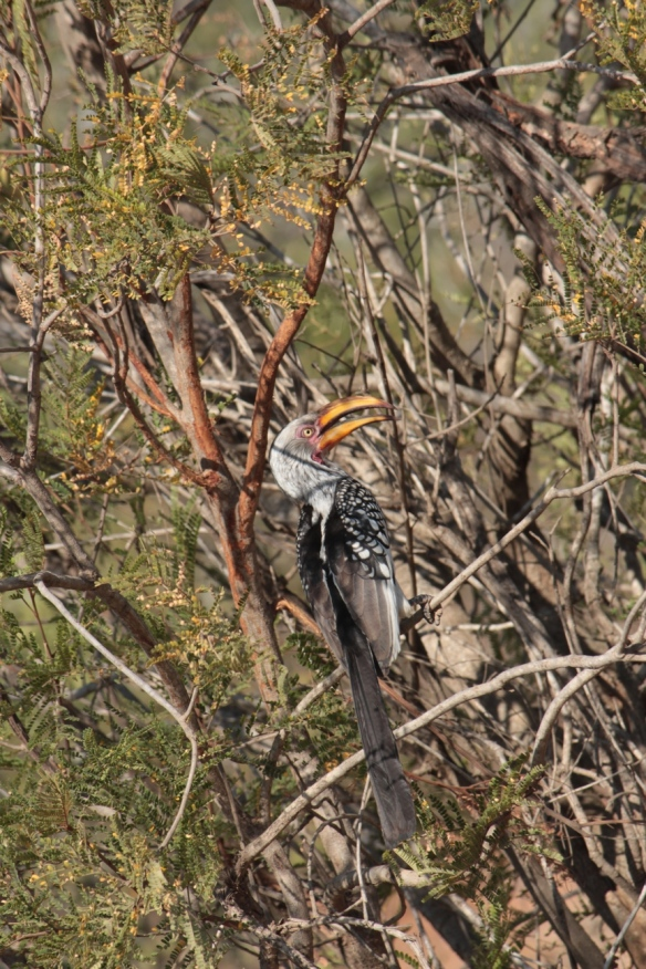 Kruger May 2015 38 - Copy