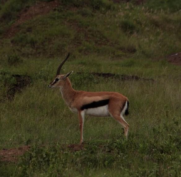 Nairobi NP May 2016 23