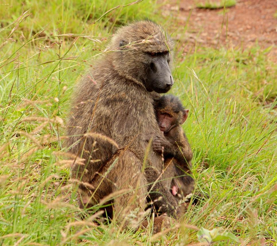 Nairobi NP May 2016 310