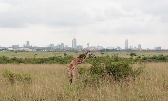 Nairobi NP May 2016 376